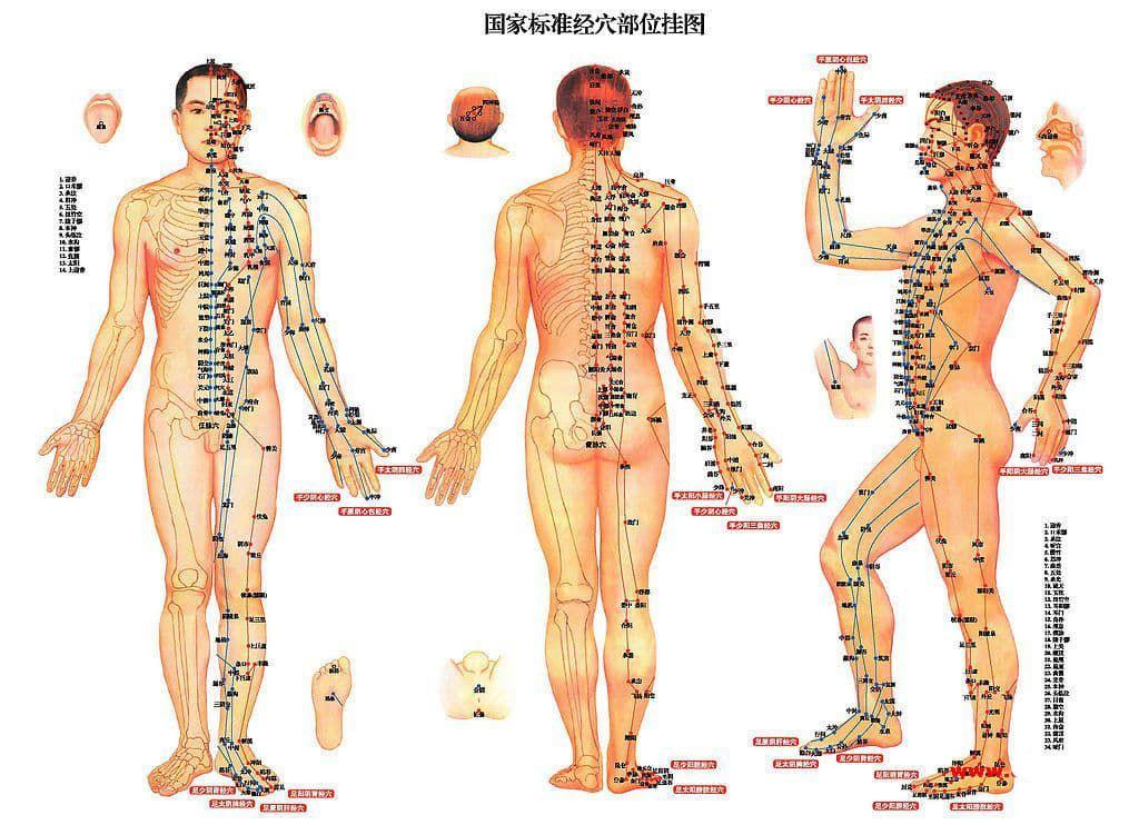 Расположение аккупунктурных точек на теле человека